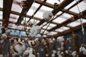 綿小屋の様子