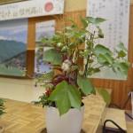 6綿の鉢の植え込み1