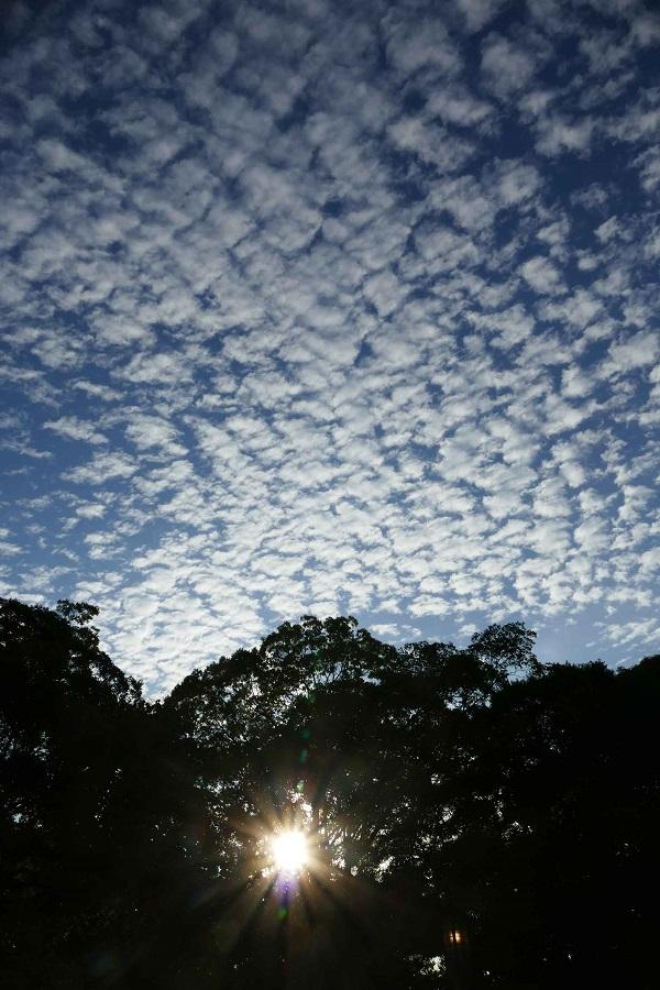1うろこ雲